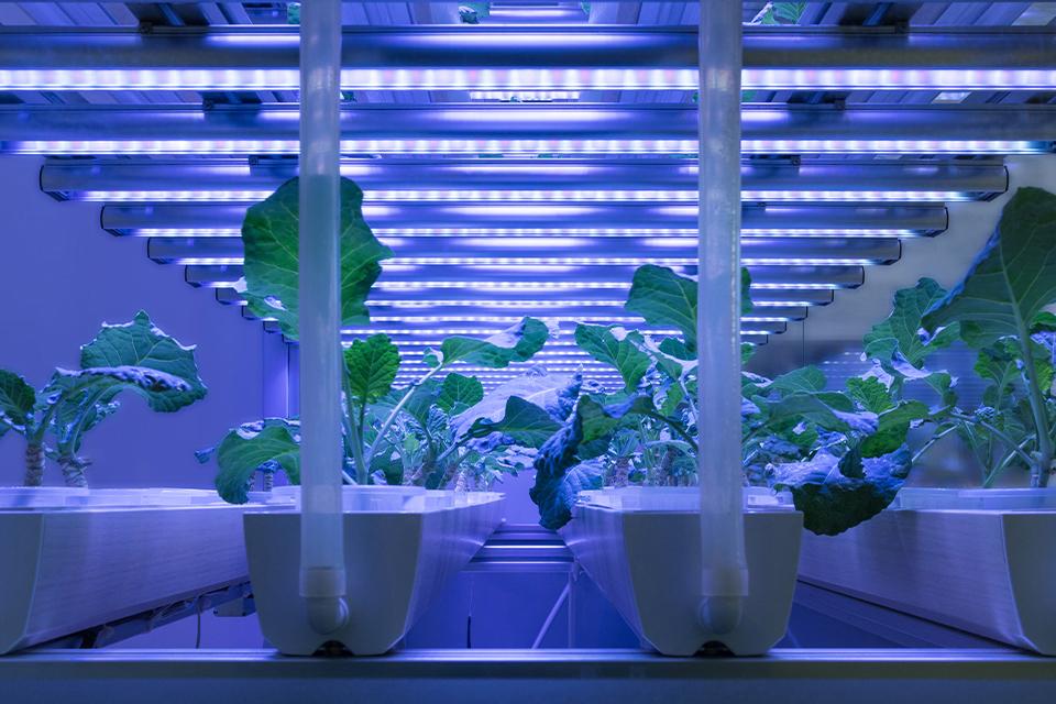 LED-greenhouse-grow-lights
